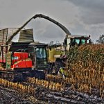2017-10-05 Maisoogst Garyp (2) HDR