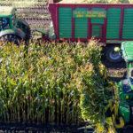slide-3 mais oogsten